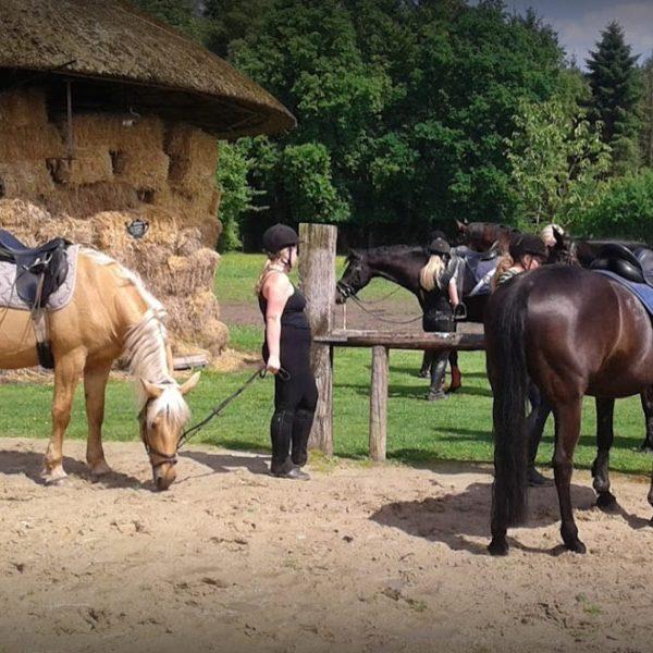 paardrijden-nederweert-003