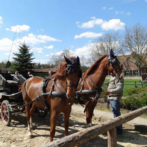 paardrijden-nederweert